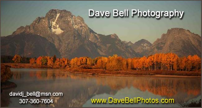 Dave Bell Photography