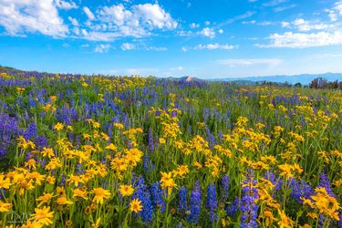 Wildflowers. Photo by Dave Bell.