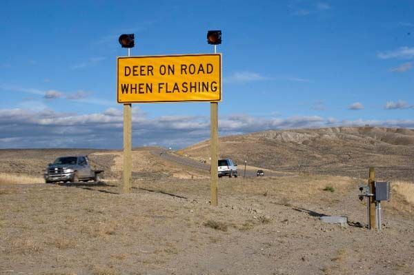 Wildlife warning sign pinedale online news wyoming for Game and fish wy
