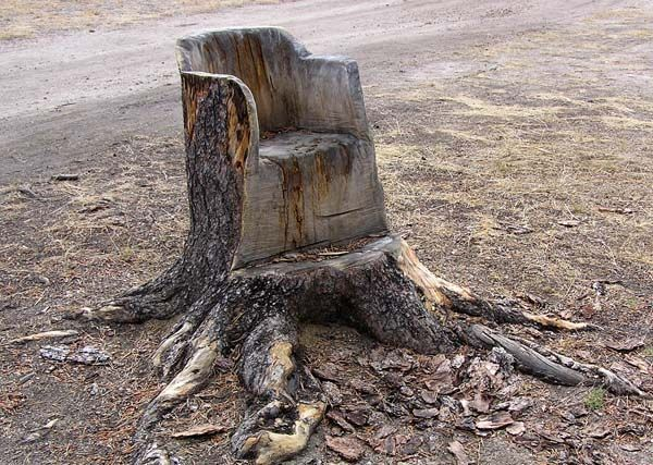 Tree Chair. Photo By Dawn Ballou, Pinedale Online.