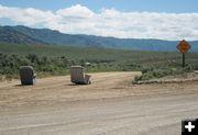 Free or Roadblock?. Photo by Dawn Ballou, Pinedale Online.