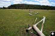 Old Buck Fence. Photo by Dawn Ballou, Pinedale Online.