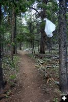 Middle Trail. Photo by Dawn Ballou, Pinedale Online.