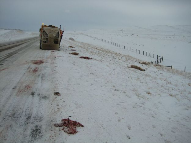 Winter speed kills pinedale online news wyoming for Game and fish wy