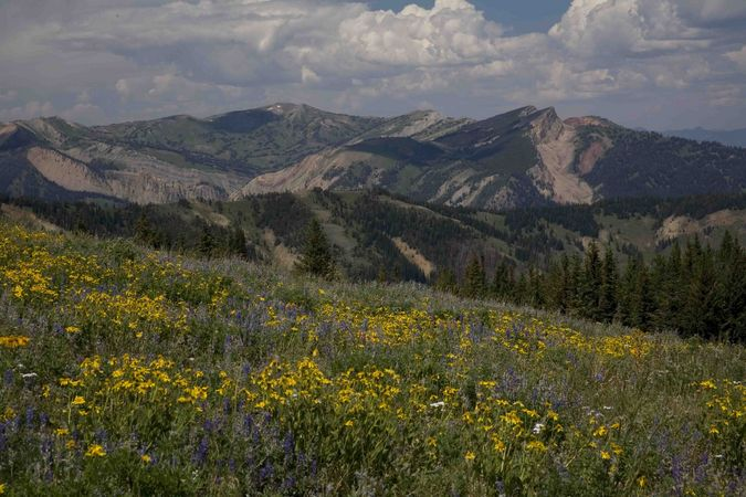 Flowers and Hoback Peak. Photo by Dave Bell.