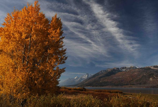 Yellow Leaves And Teton Front. Photo by Dave Bell.