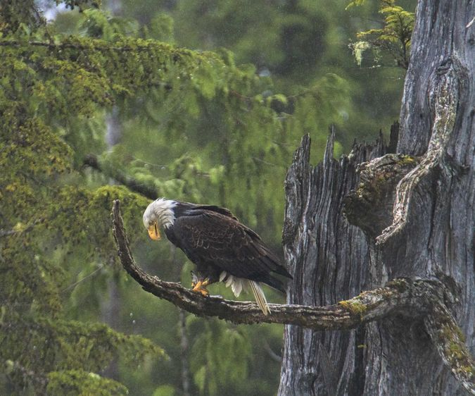 Eagle Lunch. Photo by Dave Bell.
