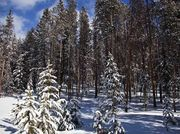 Snowy Forest (Presidents Day). Photo by Dave Bell.
