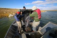 Wyoming Game & Fish biologists survey fish populations in Soda Lake. Photo courtesy Wyoming Game & Fish.