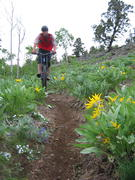 Mountain biking trail at White Pine Resort. White Pine courtesy photo.