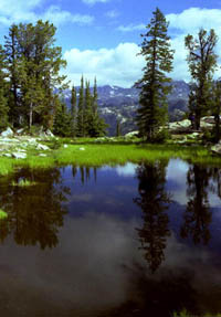 Pond by Photographer's Point. Pinedale Online photo.