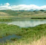 Soda Lake Wetland Area