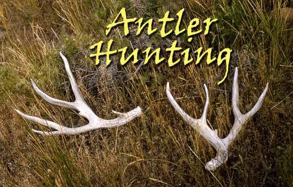 Antler Hunting Wyoming Horn Hunting