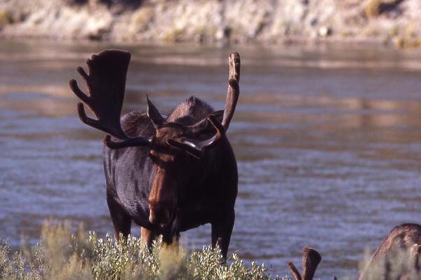 Wyoming Hunting Pinedale Wyoming